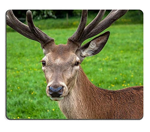 Mouse pad Gaming Mouse pad Red Deer Natural Rubber Material PN00X9343