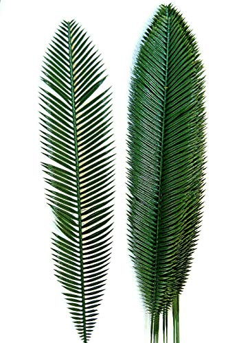 12 St. 70 cm Palmwedel Kunstpalmen Künstliche Blätter Deko Floristik Strauß L55 (L55)