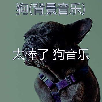 狗(背景音乐)