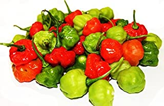 50 Seed Packet - Aji Cachucha Seeds - Aji Dulce - Cachucha - Sweet Peppers - Ajicito - Aji Gustoso - Scotch Bonnet - Bonney Peppers - Caribbean red Peppers - Capsicum Chinese