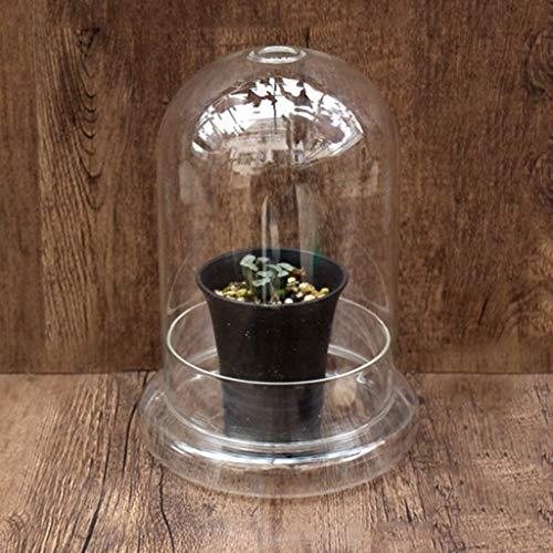 WXJ Planta de Cultivo Cerrado Invernadero Hidratante Transparente Cubierta Redonda Diseño de Copa Flor De Invernadero Y Protección Suculenta (con Maceta)