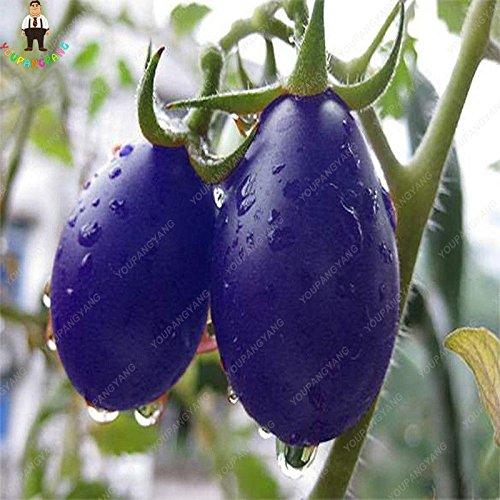 100pcs Violet Tomates cerises Graine Fruits et légumes Balcon Bonsai Seed Facile à cultiver jardin Plantes en pot jaune