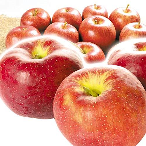 国華園 食品 青森産 新物一番赤りんご 5�s1箱 りんご