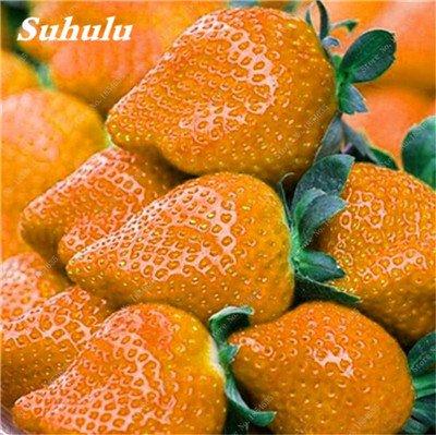 Big Promotion! 1000 Pcs Four Seasons en pot Graines Strawberry Super Sweet Seeds fruits Bonsai plantes Semences Maison et Jardin 15
