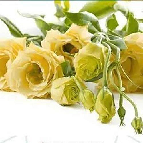 Fuduoduo Semillas De Flores De Primera Calidad,Planta fácil de Vivir bálsamo-Yellow_200 pcs,Planta Maceta Semillas
