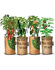 4x Stadstuintjes hete pepers kweken