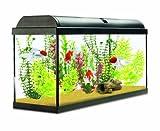 Interpet Aquaverse Aquariums en Verre, Kit Complet pour débutant/avancé Start Up