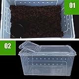 Wasserreptil Transportbox Fütterung Brutbox für Terrarium - 6