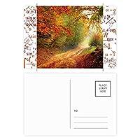 自然風景森林科学の緑の光 公式ポストカードセットサンクスカード郵送側20個