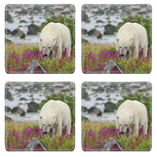 MSD Drink Coasters 4 Piece Set Image ID: 23569369 Canadian walking in the colorful arctic tundra of the Hudson Bay