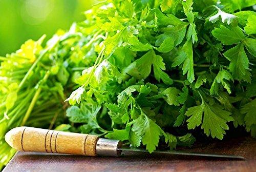 Semillas de cilantro - Coriandrum sativum