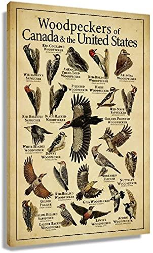 APAZSH Posters para Pared Pájaros carpinteros Tipos Conocimiento Poster Antiguos Pinturas Art déco Impresiones de Cuadros Obra de Arte Paneles de Pared Pasillo 60x90cm x1 Sin Marco