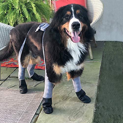 Walker Paws New Dog Leggings