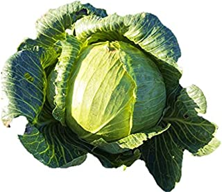 flat cabbage