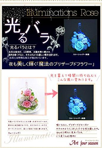 日本ジーティー『押花四季アートフォーシーズン光るバラうさぎ』