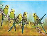 Kreuzstich Stickpackung,Papagei auf einem Ast11CT Stickbild Stickvorlage Vorgedruckt Stickset für...