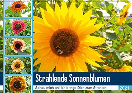 Strahlende Sonnenblumen (Wandkalender 2021 DIN A2 quer)