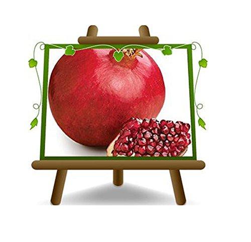 grenade Fruits rouges Graine molle Plante fruitière sur un pot de 20 - max 180 cm - 2 ans