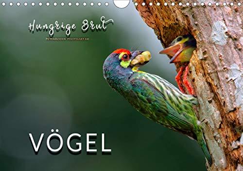Vögel - Hungrige Brut (Wandkalender 2021 DIN A4 quer)