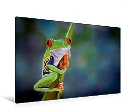 Premium Textil lienzo 120 cm x 80 cm horizontal, rojo augenlaubfrosch (Agalychnis callidryas), cuadro de pared, imagen sobre bastidor, imagen sobre lienzo auténtico, Costa Rica de Calvendo Animales