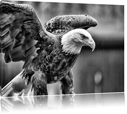 Monocrome, Adler, Format: 80x60 auf Leinwand, XXL riesige Bilder fertig gerahmt mit Keilrahmen, Kunstdruck auf Wandbild mit Rahmen, günstiger als Gemälde oder Ölbild, kein...