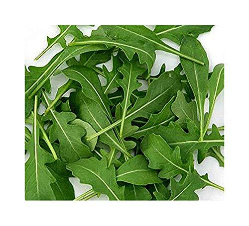 Wilde Rauke - Rucola selvatica - Salat Rukola - 1000 Samen