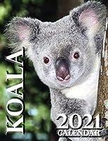 Koala 2021 Calendar