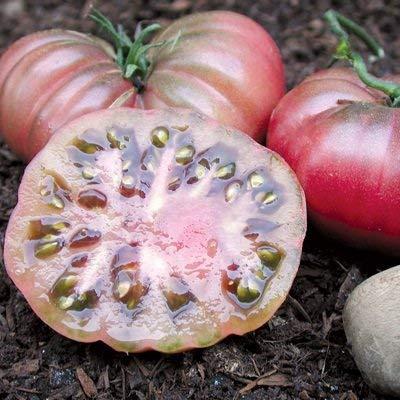 vegherb 1 Gramm Bio-Seeds of Lila Calabash Tomate Bio