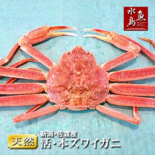 魚水島 活ズワイガニ姿 新潟・佐渡産「活 本ズワイガニ」(生 本ずわい蟹)大600g以上