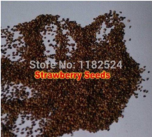 100% d'origine Graines rares fraîches de nouvelles usines de semences de légumes - Bonsai fruits végétaux légumes