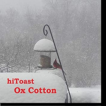 Ox Cotton