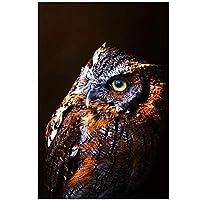 JXRDG フクロウ動物5Dダイヤモンド絵画キット、フルスクエアドリル刺繡アートクラフト家の壁の装飾ギフト30x45cmフレームなし