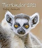 Tierkinder 2021 - Wand-Kalender - 30x34 - Baby-Animals: Baby Animals