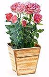 Maceta con rosas rojas,tarjeta Pop-Up en 3D, no se marchitan, ideal como tarjeta de cumpleaños o tarjeta de San Valentin