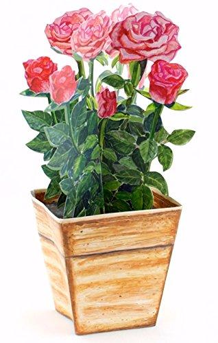 Carte pop-up 3D avec un pot de roses, faite à la main - Idéal comme carte anniversaire ou carte de St Valentin / Invitation de mariage