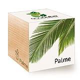 feel green ecocube palme, idea regalo sostenibile (100% eco friendly), grow your own/set di coltivazione, piante nel dado in legno, made in austria