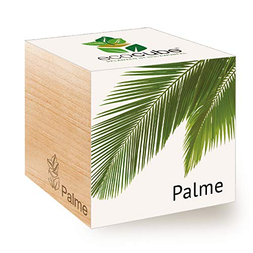 Feel Green Ecocube Palme, Idea de Regalo sostenible (100% Eco Friendly), Grow Your Own/Anzuchtset, Plantas en el Cubo de Madera, Fabricado en Austria