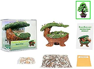 Eve's Bonsai Babyland Black Pine Seed Kit, Complete Kit to Grow Black Pine Bonsai Trees from Seed, Unique and Exclusive Bonsai Babyland Planter