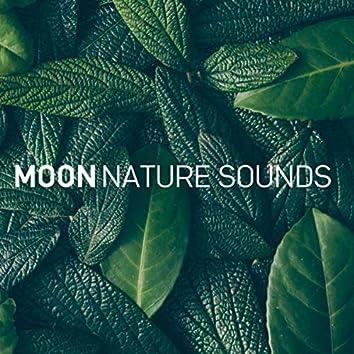 Zen Ocean (8D Audio)