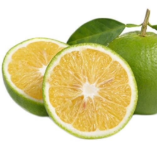 小笠原の菊池レモン1kg 国産・無農薬無化学肥料 ノーワックス 防腐剤不使用