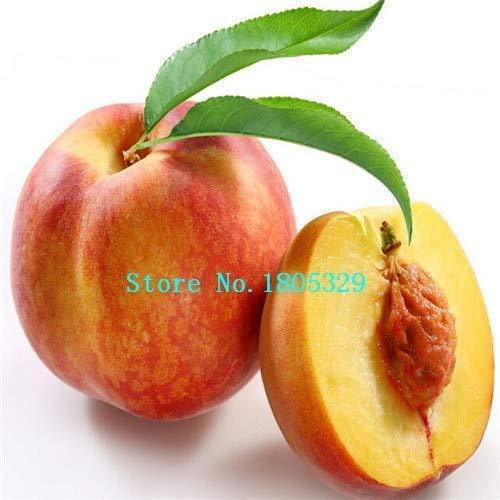 Bloom Green Co. GGG Enanos bonanza melocotones, Melocotonero - Semillas de durazno - Semillas de frutas semillas de bonsai - 1 pieza: Negro