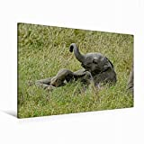 CALVENDO Lienzo Premium de 120 cm x 80 cm Horizontal, un Motivo del Calendario de Elefantes para niños. Pared de Savanne (Imagen en Bastidor). Elefante en el Masai Mara Animales