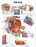 The Eye Anatomical Chart
