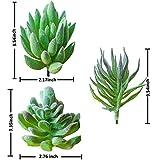 Zoom IMG-2 piante succulente artificiali trubuy 12