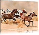 Western Pferde in Wüste Format: 60x40 auf Leinwand, XXL