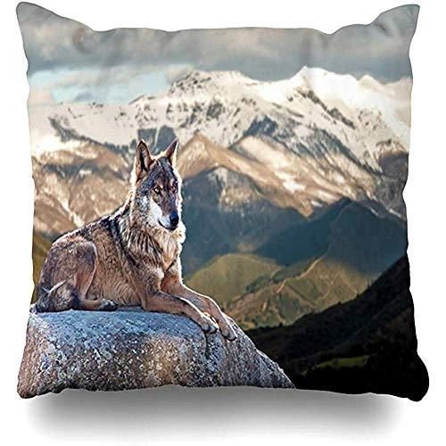 Fodera per cuscino Fodere per cuscino Mammifero Foresta grigia Lupo iberico Sdraiato su rocce Fauna selvatica Testa di natura Selvaggio Canino Bosco Peloso 45X45Cm (18X18In)