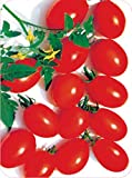 Tainan Wealthy F1 Cherry Tomato Seeds 300 Capsule