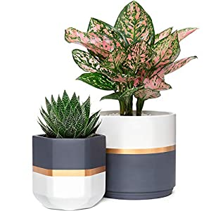 Silk Flower Arrangements Mkono Ceramic Planters 5 and 6.3 Inch Indoor Modern Flower Plant Pot Set of 2 Geometric Gardening Pots with Drainage for All House Plants, Herbs, Flowers, Gold and Grey Detailing (Plants NOT Included)
