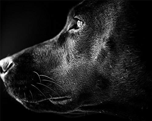 Diamond Painting Full Drill Mosaik Tierstile Schwarze Labrador-Welpenseitennahaufnahme Runder Bohrer 30X40 Cm Helfen Sie Stress Abzubauen Und Sich Zu Entspannen
