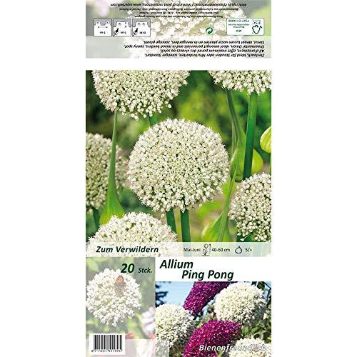 Florado 20x Zierlauch Blumenzwiebeln `Ping Pong`, Garten, Blumen Schnittblumen Zwiebelblumen, Bienen Insekten Hummeln, Größe 5/+